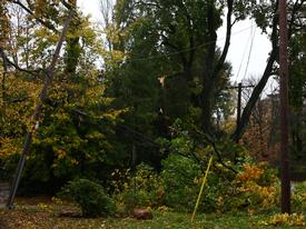 High winds brought this tree and wires down in Easttown Twp.